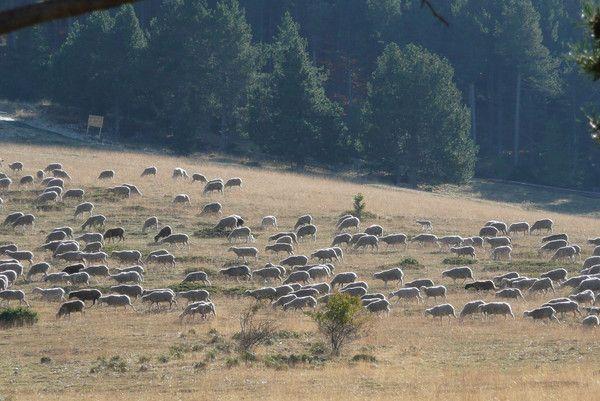 Moutons sur le mont ventoux - Acheter village abandonne ...